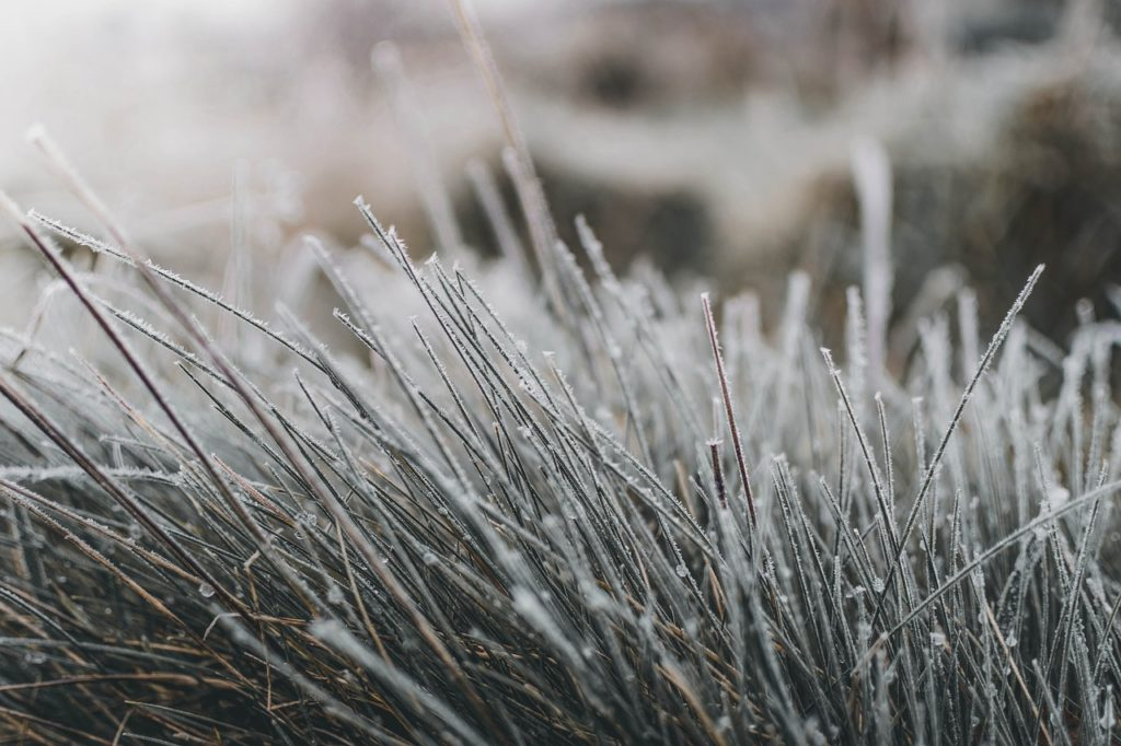 grass, frost, winter