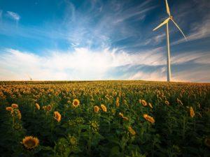sunflowers, windmill, field-1853323.jpg